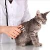 Ветеринарные клиники в Антропово